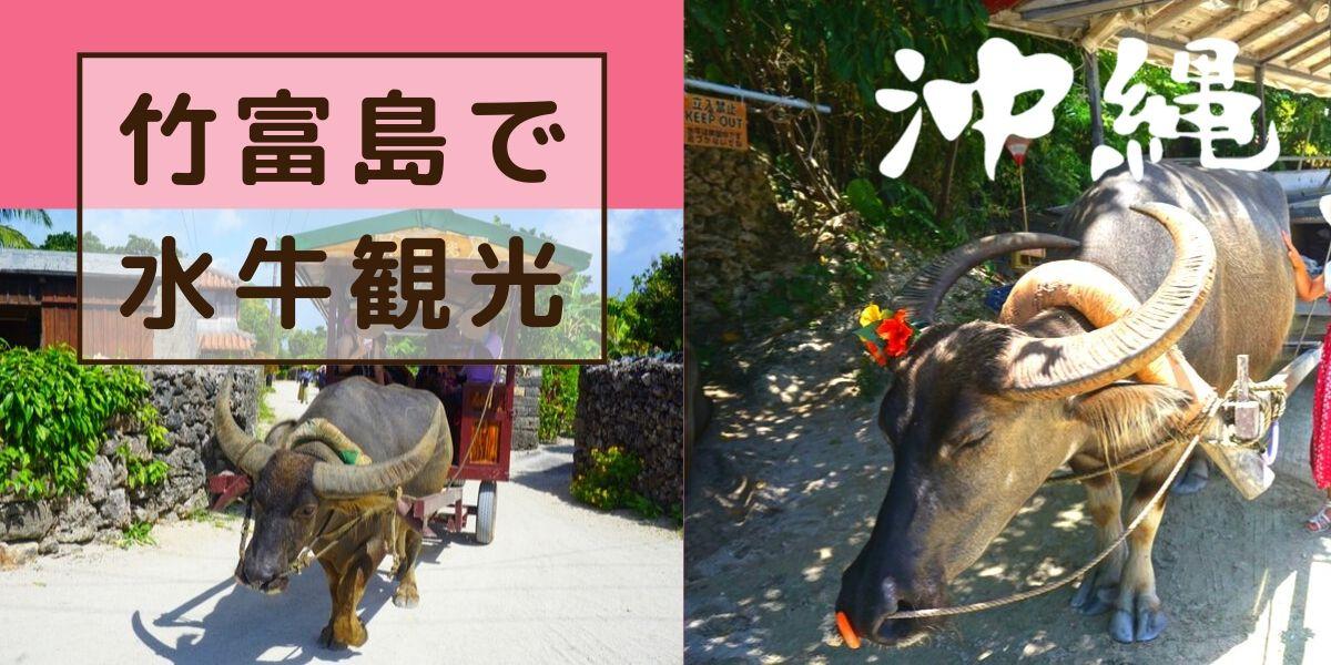 竹富島といえば【水牛車観光】子連れで体験してきました